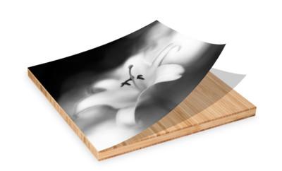 Bamboe aan je muur